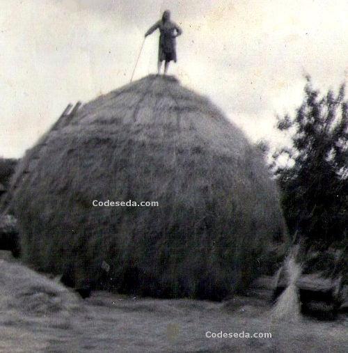 Año 1950 - Palleiro en Xubrei