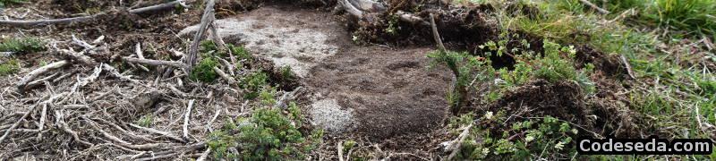a-estrada-petroglifos-castro-bouza-brey