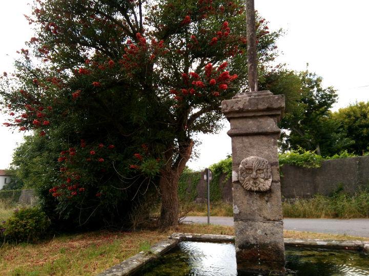 ceibo-Erythrina crista-galli-arbol