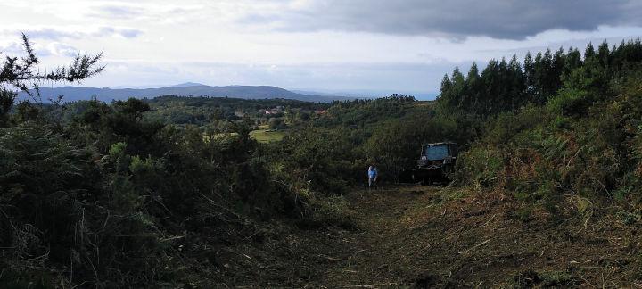 galicia/desbroce-camino-real-calzada-empedrada-a-portela