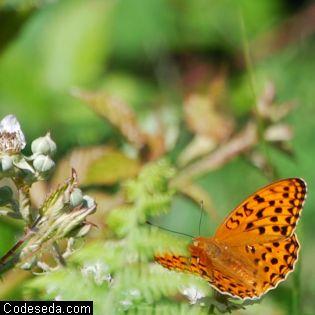 mariposa-foto