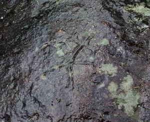 petroglifo-a-estrada-descuberto