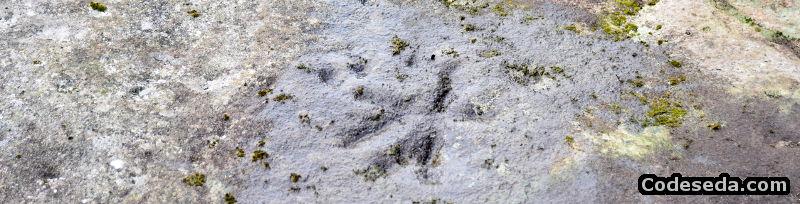 petroglifos-castro-ribela-bouza-brey