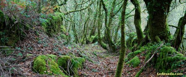 senderismo-camino-antiguo-sabucedo