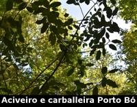 turismo-galicia-aciveiro-e-carballeira-porto-bo