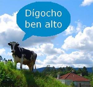 vaca-galega